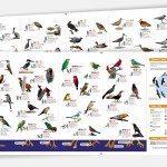 Print: Bird guide for El Refugio de Potosi by Cameron Kaseberg