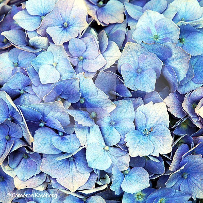 Photo: Blue by Cameron Kaseberg
